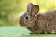 Cute Litte Rabbit On Green Grass With Natural Bokeh As Background. Young Adorable Bunny Playing In Garden.