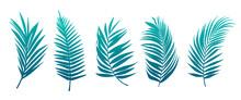 Beautiful Palm Tree Leaf Set Green Background Vector Illustration