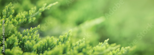 Fotografiet Closeup of beautiful nature view green leaf on blurred greenery background in garden with copy space using as background cover page concept