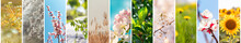 Spring Banner. Spring In The Forest, Abstract Natural Backgrounds