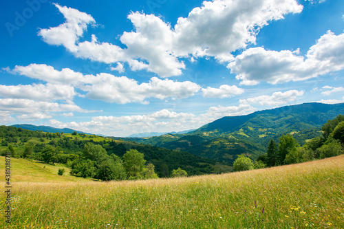 carpathian rural landscape in mountains. grass and herbs on the meadow, trees on the hills rolling down in to the valley. beautiful summer nature scenery on a sunny day with fluffy clouds on the sky #438108878