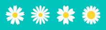 Chamomile Daisy Round Icon Line Set. White Flower. Camomile Petal. Cute Plant Collection. Growing Concept. Love Card. Happy Valentines Day Decoration. Flat Design. Green Background. Isolated.