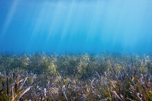 Underwater Background With Seaweed