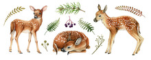 Forest Deers. Beautiful Fawn Image. Watercolor Bambi Illustration. Wild Young Deer Animal With White Back Spots, Fern, Grass Elements. Forest And Park Wildlife Animal Set On White Background