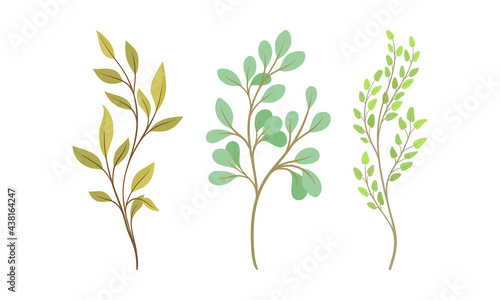 Fotografia Sprigs and Twiglets with Green Leaves as Botanical Foliage Vector Set