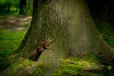 Wiewiórka na pniu drzewa