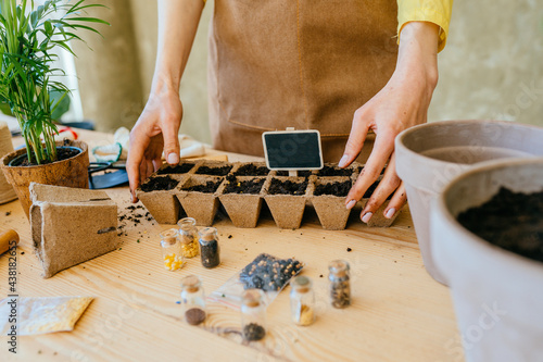 Obraz na plátně Ecological garden, sowing plants into pots of peat at home