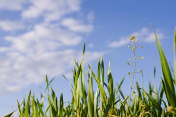 Młody kwiat na polu