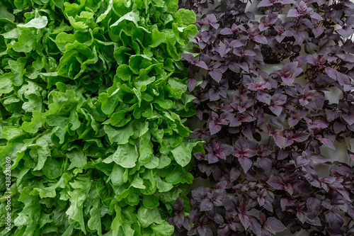 Photo Rows of vegetables in organic vertical farming