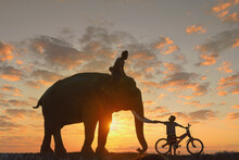 Silhouette Of A Mahout Riding An Elephant At Sunset And A Boy On A Bicycle, Thailand