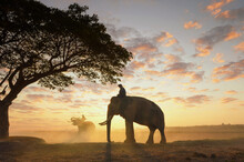 Silhouette Of A Mahout Riding An Elephant At Sunset, Thailand