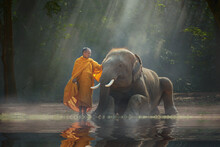 Monk Stroking An Elephant In The Forest At Sunrise, Thailand