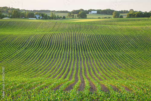 Field of young corn and farms on rolling hills at sunset on a spring day in Minnesota #438247085