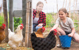 Little girl with her mother feeding chickens happily and enjoy in the chicken farm on a warm summer day