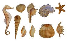 Seahorse Seashells Mollusks Starfish Illustration Clipart Set Of Realistic Hand Drawn Watercolor Painting. Sandy Natural Color Style.