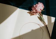 Diary  With A Pink Peony Sarah Bernhardt