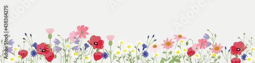 Obraz na plátně minimal background wild flower vector for spring and summer wallpaper