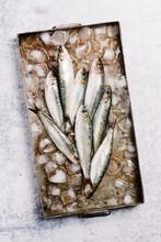 Fresh Sardines On A Tray
