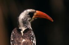 Curious Hornbill Bird Sitting On Branch
