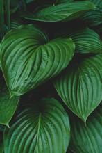 Green Leaf Texture Sbackground