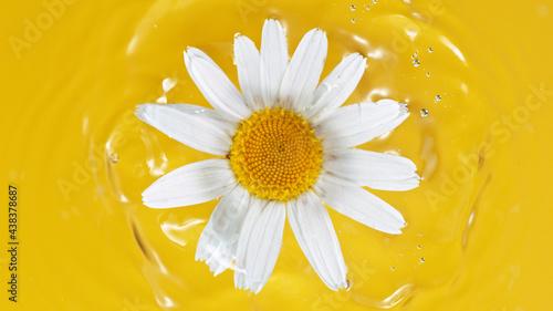 Vászonkép One white daisy flower on yellow water background, macro.