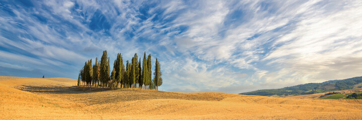 Beautiful typical tuscan panorama with cypress trees in a field in summer, Tuscany, Italy
