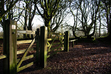 Wooden Fence And Closed Gates And Shadows With Bare Beech Trees In The Background