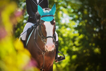 A Beautiful Bay Horse With A Rider In The Saddle Walks Through The Park Among The Green Foliage Of Trees On A Sunny Summer Day. Horse Riding. Equestrian Sports. Equestrian Life.