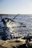 Fototapeta Fototapety z morzem do Twojej sypialni - Gałąź w wodzie