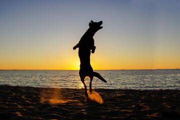 Pies i zachód słońca