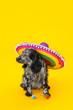 Leinwandbild Motiv Cute dog in sombrero hat on color background