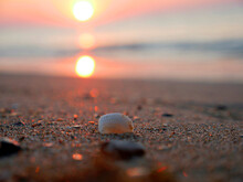 Seashell In The Sand On The Shore, The Sky And Sand Are Colored Orange By The Rising Sun