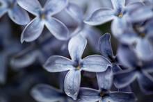 Close Up Of A Flower, Nacka, Sweden, Stockholm,sverige