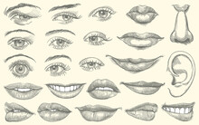 Facial Features. Design Set. Hand Drawn Engraving. Editable Vector Vintage Illustration. Isolated On Light Background. 8 EPS