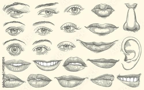 Facial features Fototapeta