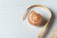 Empty Shells Of Snails On A Light Background. Concept Of Natural Decorative Materials
