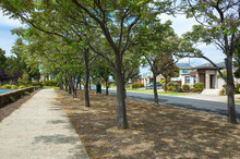 The Chinaberry Trees On The Nature Stripe And The Pedestrian Sidewalk With Some Australian Residential Houses In The Background. The Suburban Street View In Wiliams Landing, Melbourne, VIC Australia.