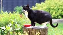 Male Cat On Tree Stump, Black White House Cat