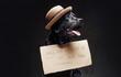 Leinwandbild Motiv Stylish black doggy with a hat and sign on its front in dark background