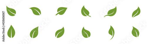 Obraz na płótnie Set of green leaves. Leaf design. Nature vector
