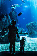 Woman And Baby Watching The Fish Tank With Sharks.
