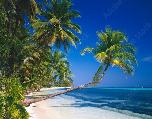 Canvastavla maldives, palm beach, indian ocean, beach, sandy beach, palm trees, sand, dream