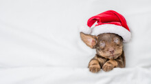 Cute Dachshund Puppy Wearing Red Santa Hat Sleeps Under White Blanket At Home. Top Down View. Empty Space For Text