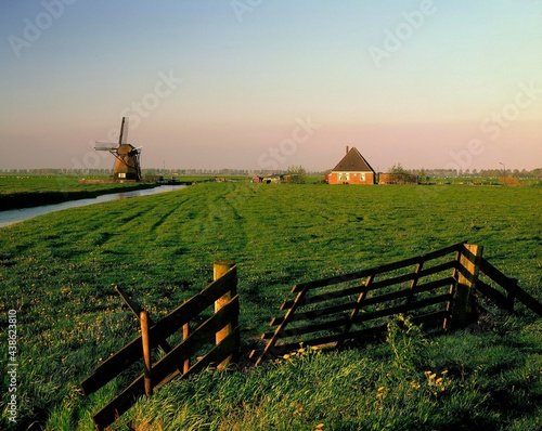 Canvas Print netherlands, polder landscape, dwelling house, windmill, holland, agriculture, p
