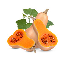 Butternut Squash With Leaves On With Background