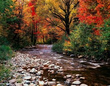 Usa, New Hampshire, Mountain Stream, Forest, Autumn, America, Creek, Water, Trees, Deciduous Trees, Nature, Vegetation, Season, Autumnal, Autumn Landscape, Landscape,