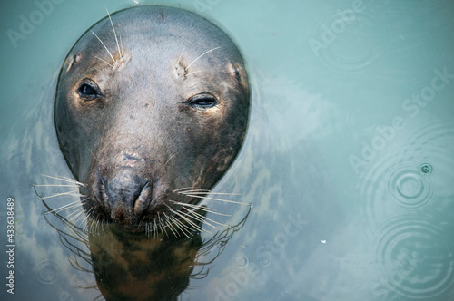 Fotografiet The Seal of Irish Sea