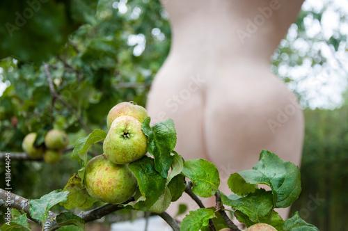 Fototapeta Garden of Eden. Adam's apple.