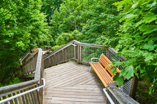 Wood Boardwalk In Forest With Bench