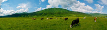Panorama Of Green Pasture With Cows. Warm Summer Day On A Background Of Blue Sky With Clouds.